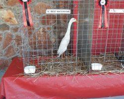 Best Waterfowl - Losos1