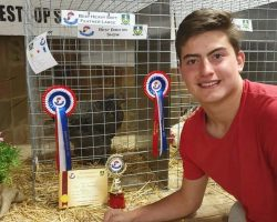 Dylan van Rensburg: Best Heavy Soft Feather Large and Best on Show with his Brahma pullet